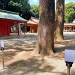 武蔵一宮 氷川神社 舞殿横の樹木に関する注意文を掲示